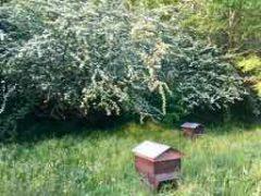 Les abeilles sont à la fête