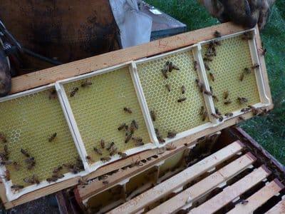 Miel en rayon en cours de construction
