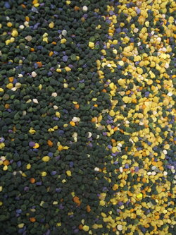 Pollen frais d'été