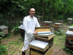Récolte de pollen à Fontainebleau