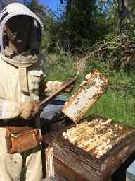 Récolte de miel de printemps