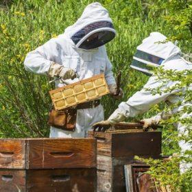Le miel en rayon 2020 est arrivé