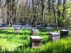 Miel de Forêt : quelques ruches en forêt de Fontainebleau