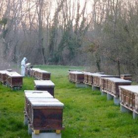 2021 annus horribilis pour les abeilles
