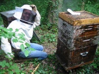 Je suis au prise avec une ruche rebelle... qui a pourtant récolté 2 hausses de miel.