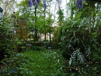 La forêt vierge à Paris. On distingue à peine les ruches au fond du jardin.