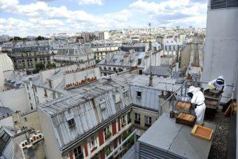 Ruches sur le toit de BETC EuroRSCG. Photo © Nicolas Gallon, www.contextes.org