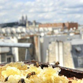 3 récoltes de miel à Paris en 2020 !
