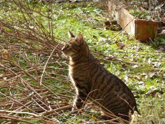 Otto surveille l'activité autour des ruches mais ce sont les oiseaux qui le captivent.