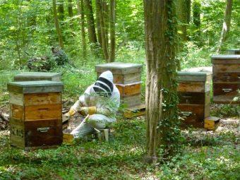 En plus du miel, on récolte également du pollen sur ce rucher.