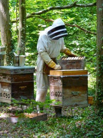 Pose d'une hausse pour la récolte du miel de Tilleul.