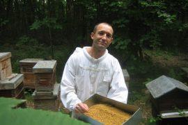 récolte de pollen de châtaignier