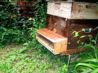 Une ruche équipée d'une trappe à pollen. En plus du miel de Paris je peux produire du pollen de Paris.