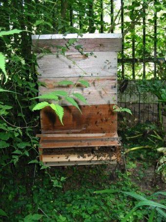 Une ruche avec deux hausses, je vais bientôt récolter le miel toutes fleurs de Ménilmontant.
