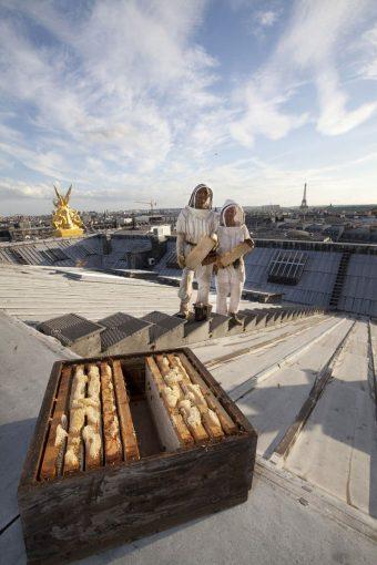 En premier plan, une hausse remplie de miel. ©Lizzie SADIN