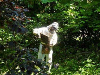 Inspection d'un cadre au Jardin Tropical au Bois de Vincennes. Je me mets au soleil pour voir si la Reine pond bien au fond des alvéoles.