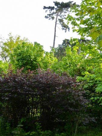 Ruches du Jardin Tropical au Bois de Vincennes.