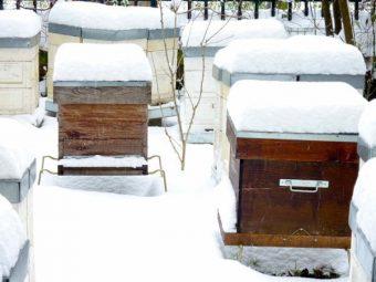 20 janvier 2013, il a neigé à Paris. Le toit des ruches permet de mesurer l'épaisseur de la couche de neige.