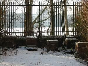 Mes ruches parisiennes sous la neige, en janvier 2009.